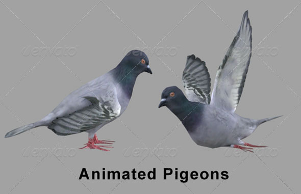 3d Pigeons Skinned Rigged
