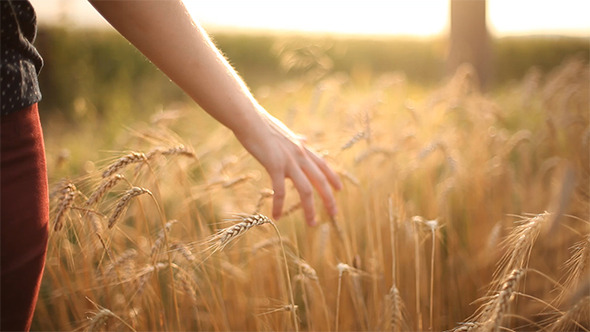 Hand On Cereal Field 2