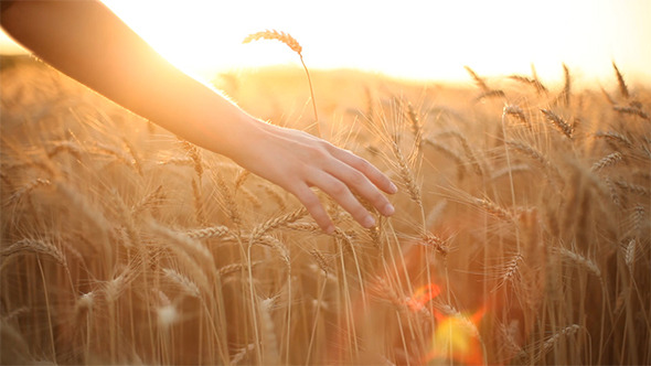 Hands On Cereal Field