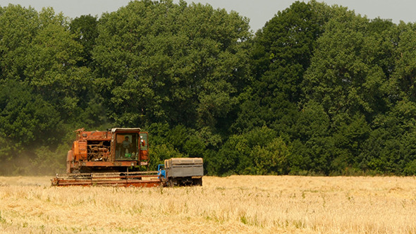 Old Grain Harvester Working In A Field