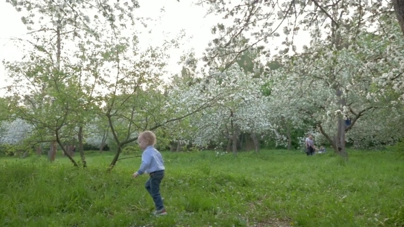 Boy Wandering Among Blooming Trees
