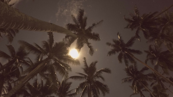 Coconut Palm Tree With The Moon And Stars. Time