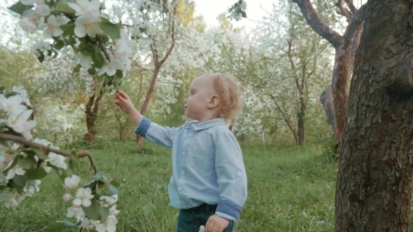 Now He Knows How Blooming Apple-tree Smells