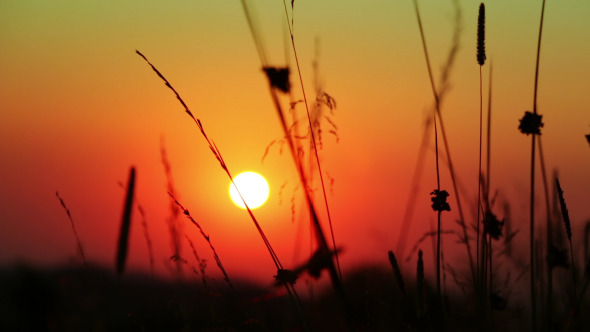 Silhouettes of Grass and the Sun