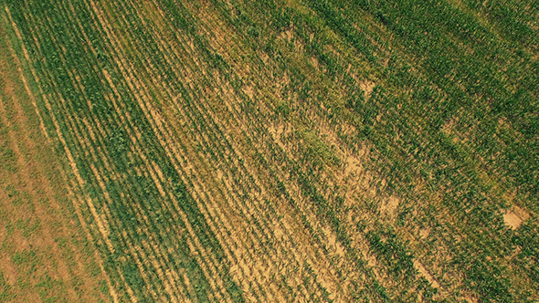 Wheat Field from Above